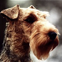 Welsh Terrier Georgia Welsh Terrier Rescue �...