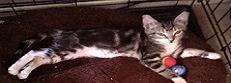 Kitt's Kitten Rescue