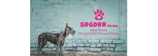 Save Rocky The Great Dane Rescue and Rehab Progr