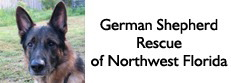 German Shepherd Rescue of Northwest Florida