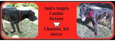 Ann's Angels Canine Rescue