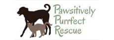 Pawsitively Purrfect Rescue